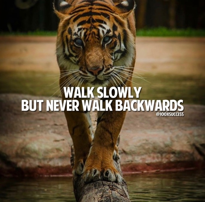 Tiger - Walk Slowly not Backwards